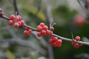 美術館前の樹になっていた実が赤くて美味しそうだった。
