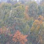 紅葉をバックに降る雪の筋