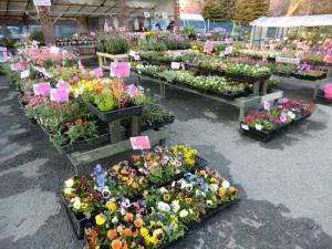 出店しているお店の前に並べられた花たち。