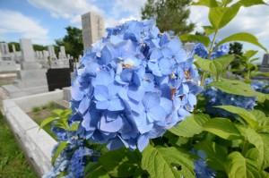 お墓の近くに咲いていた花を10mmで撮った写真