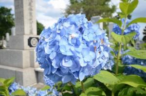 同じ花を少し離れたところから20mmで撮った写真